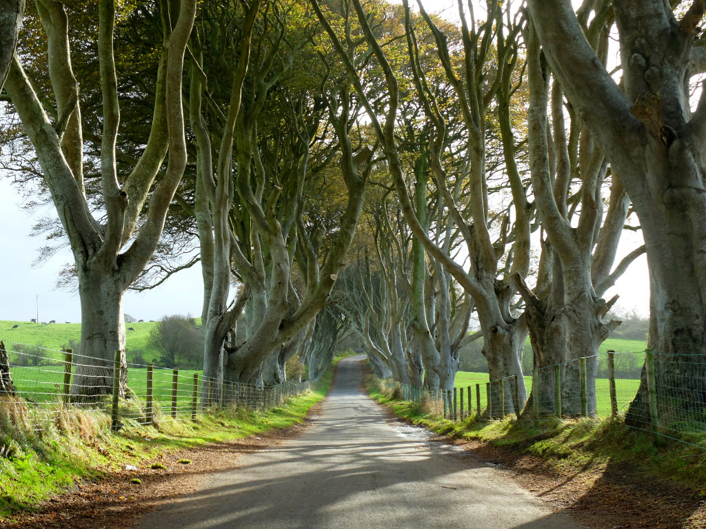 The Dark Hedges | Olivia Leaves
