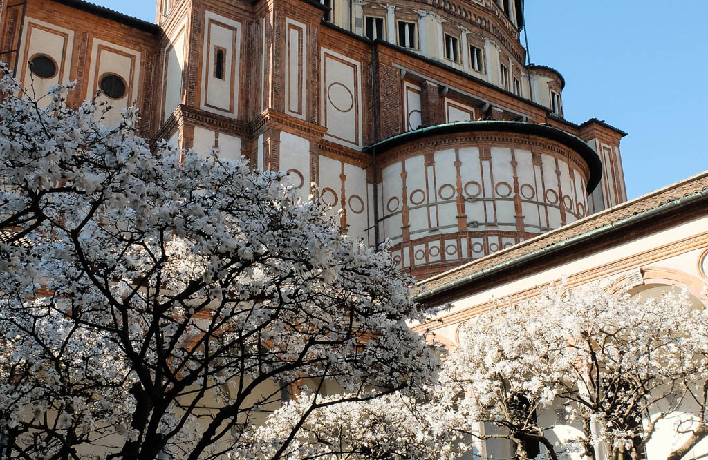 Olivia Leaves | Milan