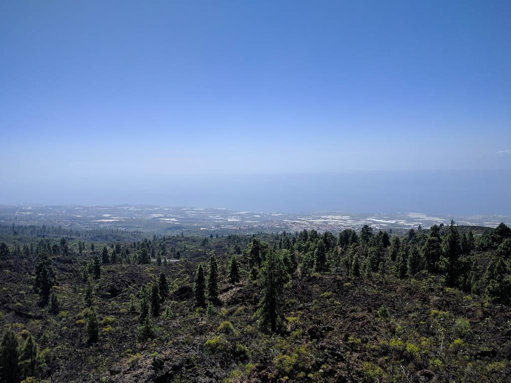 Olivia Leaves | Tenerife